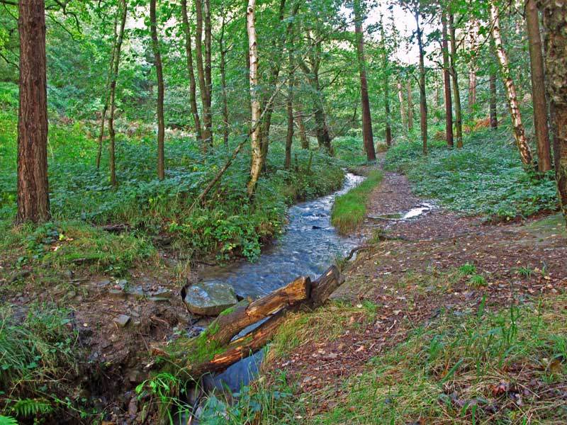 A photo of Rudge Brook in Pillowell Woods